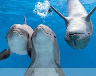 Schwimmen mit Delfinen ab safaga Hafen